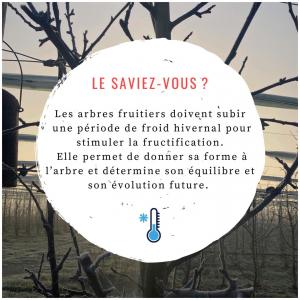 Le saviez-vous ? 🍏 #verger#vergers#lesaviezvous#hiver#froid❄️#fruits#gelées#matinale#paysage