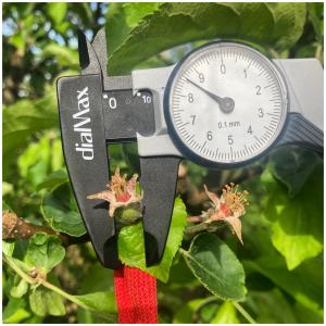Les mesures de nos futurs fruits commencent dans nos vergers écoresponsables ! 🌱🤩  #nosfruits#lespommes#vergersecoresponsables#fruits#pommes#producteurlocal#ceuxquifontlesfruits#arboriculture
